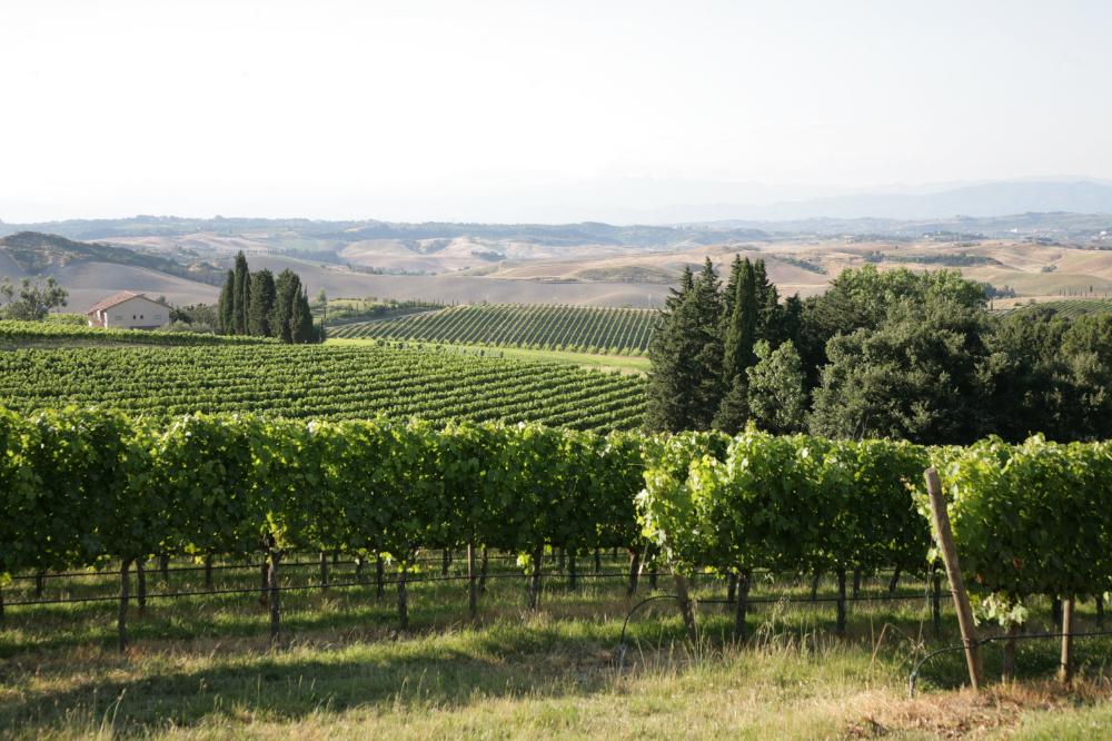 Uomo, vitigno, territorio